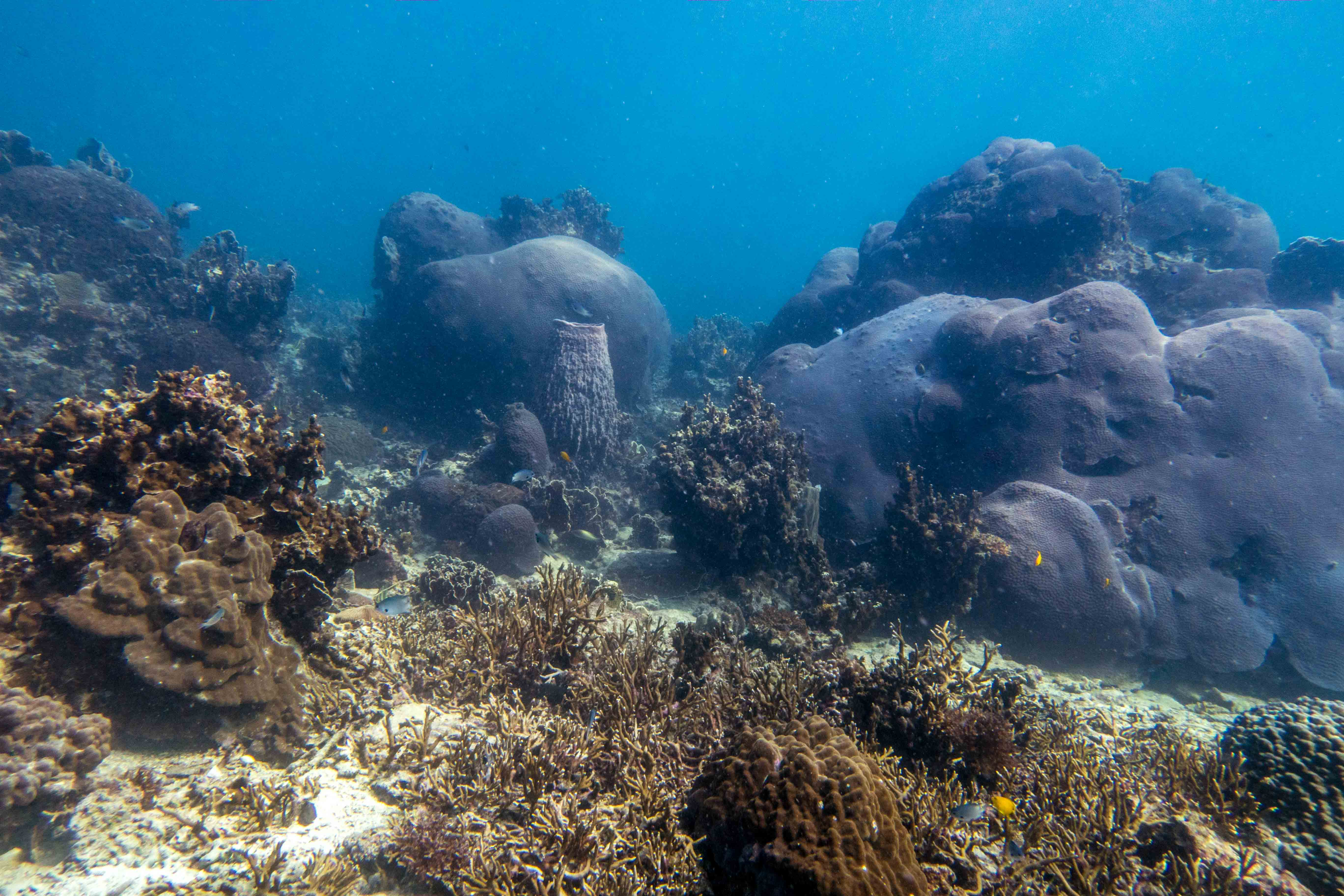 Coral Growth Forms